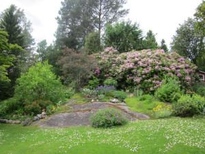 Sommar i Björboholm – Ellas trädgård