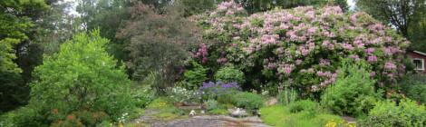 Sommar i Björboholm - Ellas trädgård