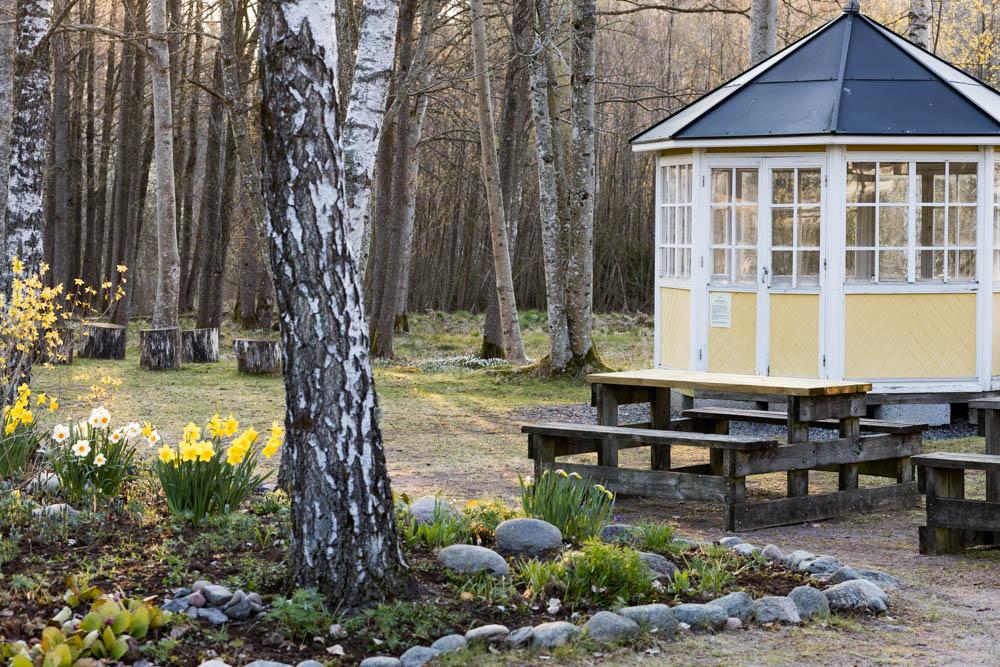 Lusthus och rabatt med påskliljor i Björboholmsparken 2021. Foto Johanna Ene.